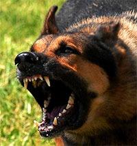 Dog Maul Injury Attorney