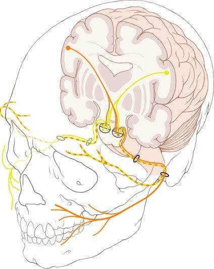 Cranial Nerve Brain Injury Attorney